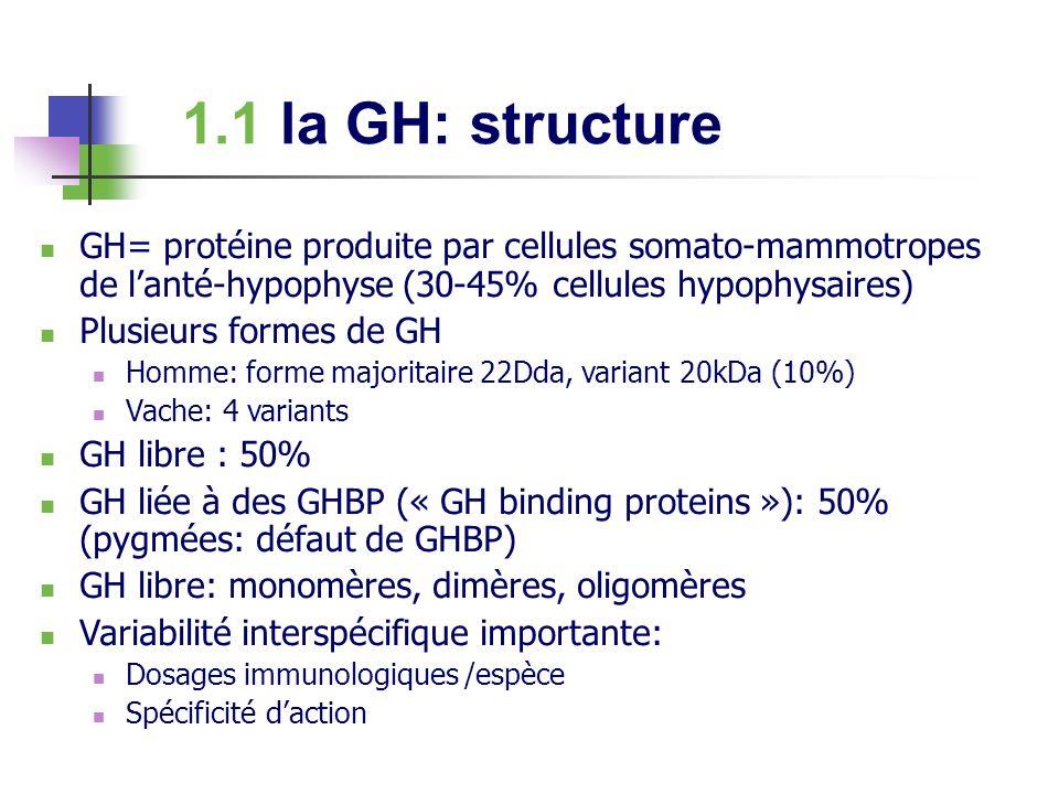 1.1 la GH: structure GH= protéine produite par cellules somato-mammotropes de l'anté-hypophyse (30-45% cellules hypophysaires)