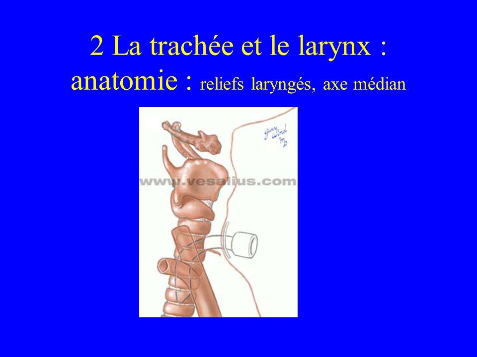 2 La trachée et le larynx : anatomie : reliefs laryngés, axe médian