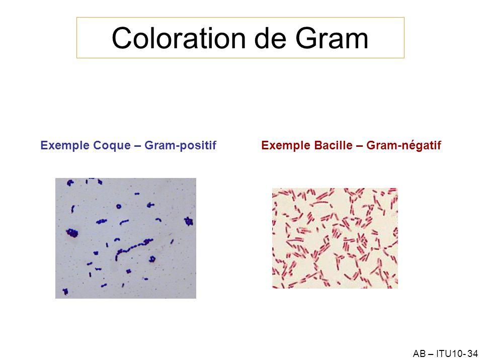 Coloration de Gram Exemple Coque – Gram-positif