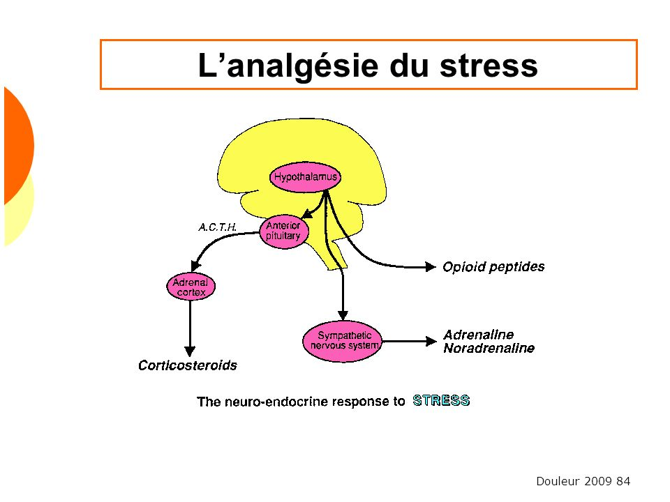 L'analgésie du stress
