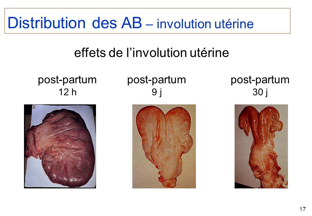 Distribution des AB – involution utérine