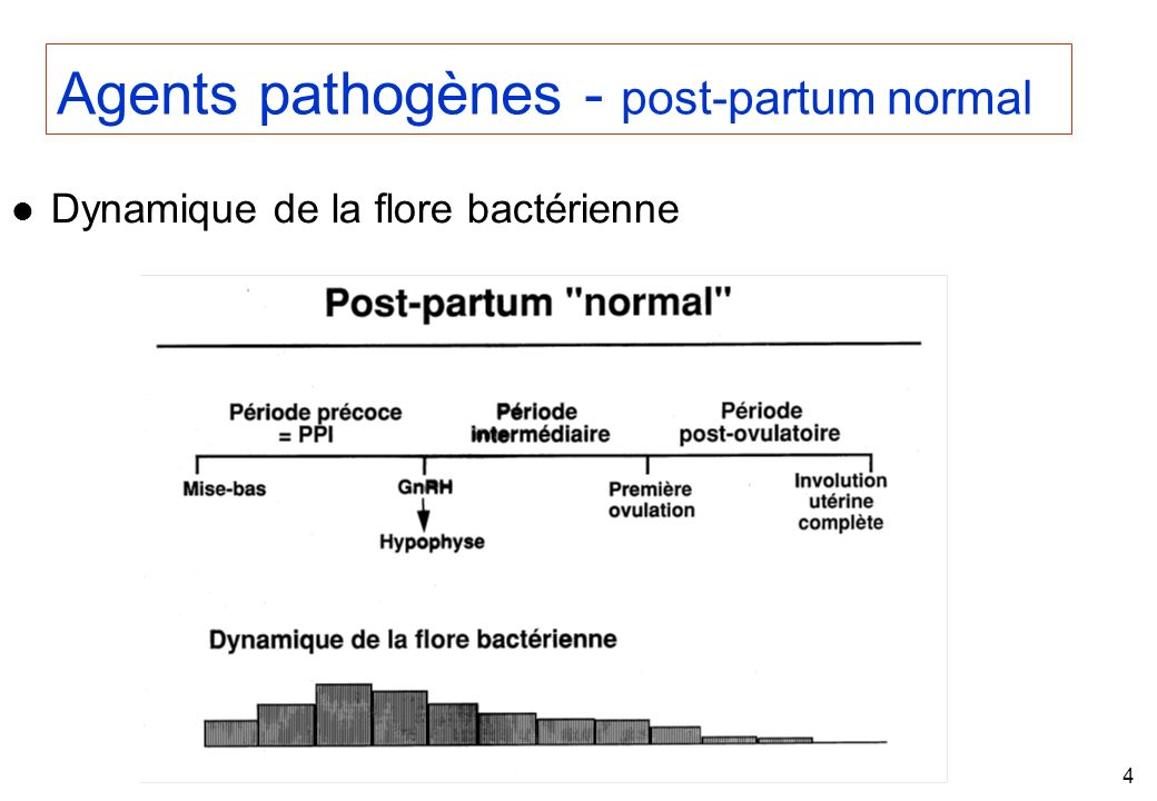Agents pathogènes - post-partum normal