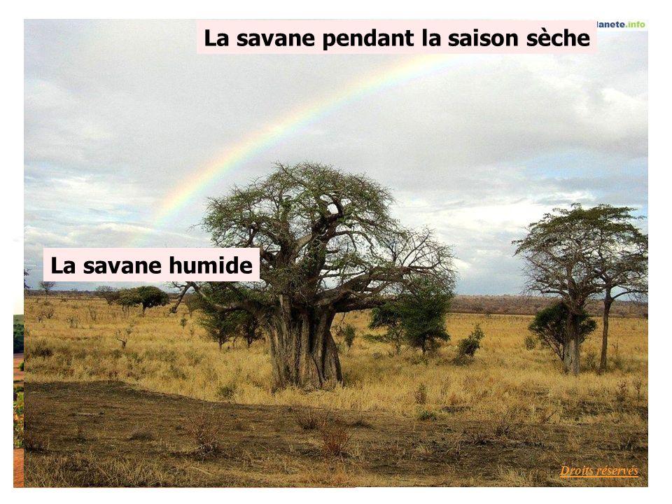 La savane pendant la saison sèche