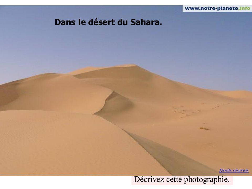 Dans le désert du Sahara.