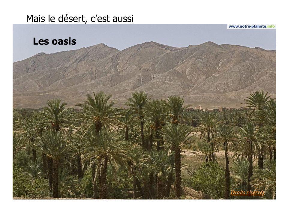 Mais le désert, c'est aussi