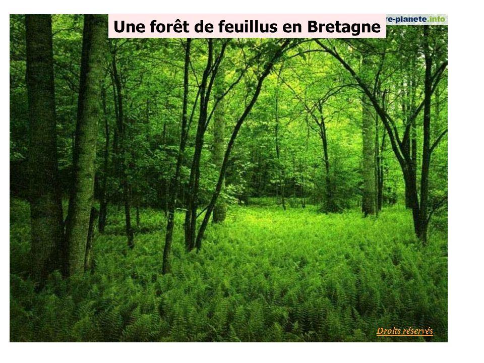 Une forêt de feuillus en Bretagne