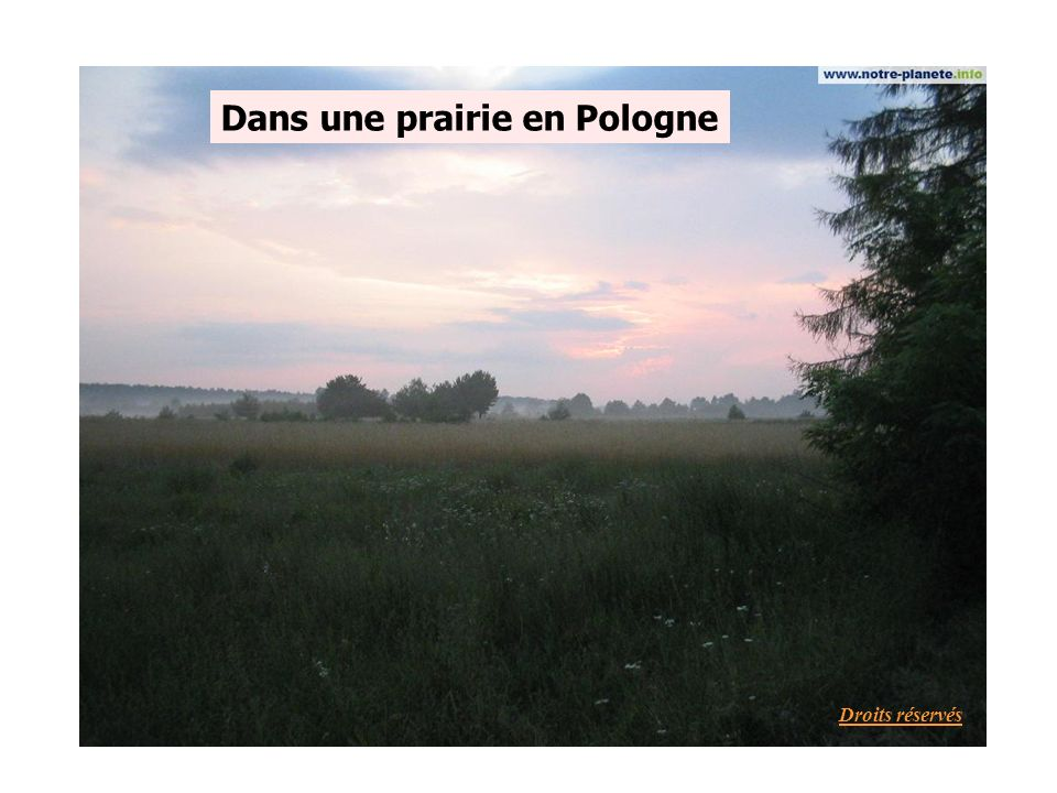 Dans une prairie en Pologne