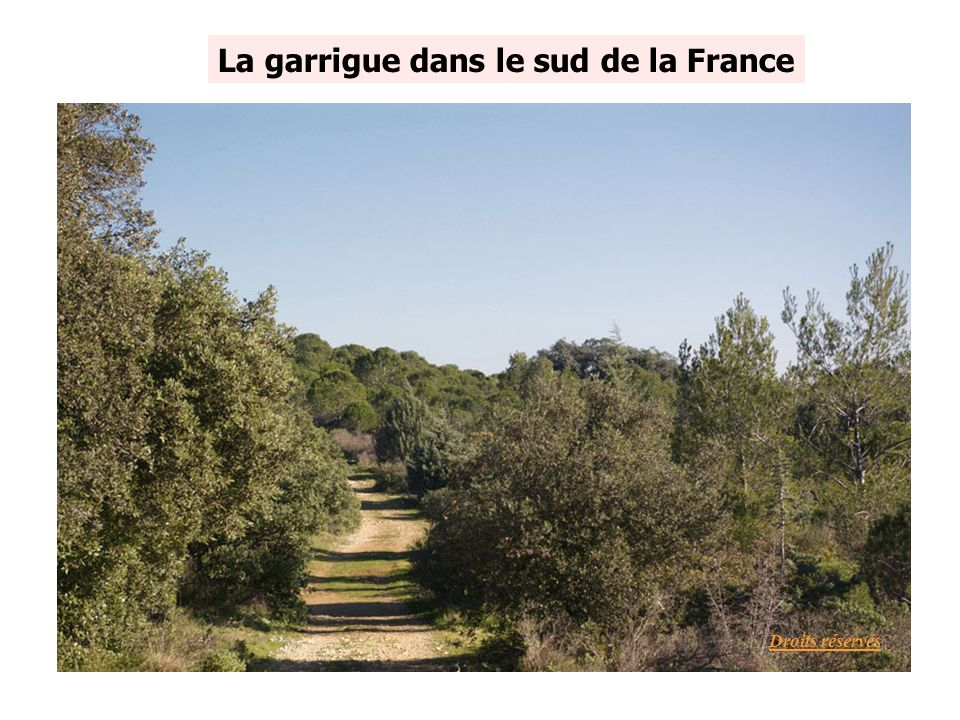 La garrigue dans le sud de la France