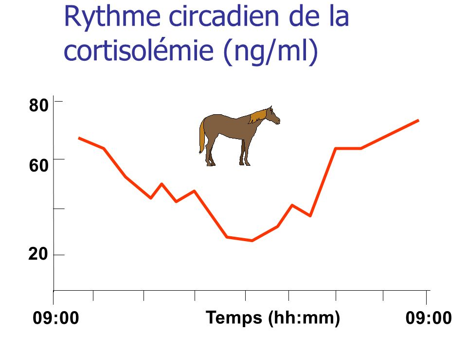 Rythme circadien de la cortisolémie (ng/ml)