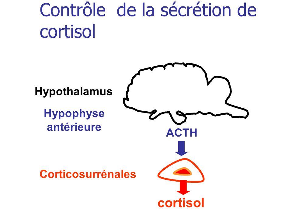 Contrôle de la sécrétion de cortisol