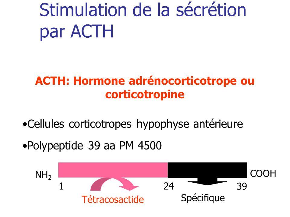 Stimulation de la sécrétion par ACTH
