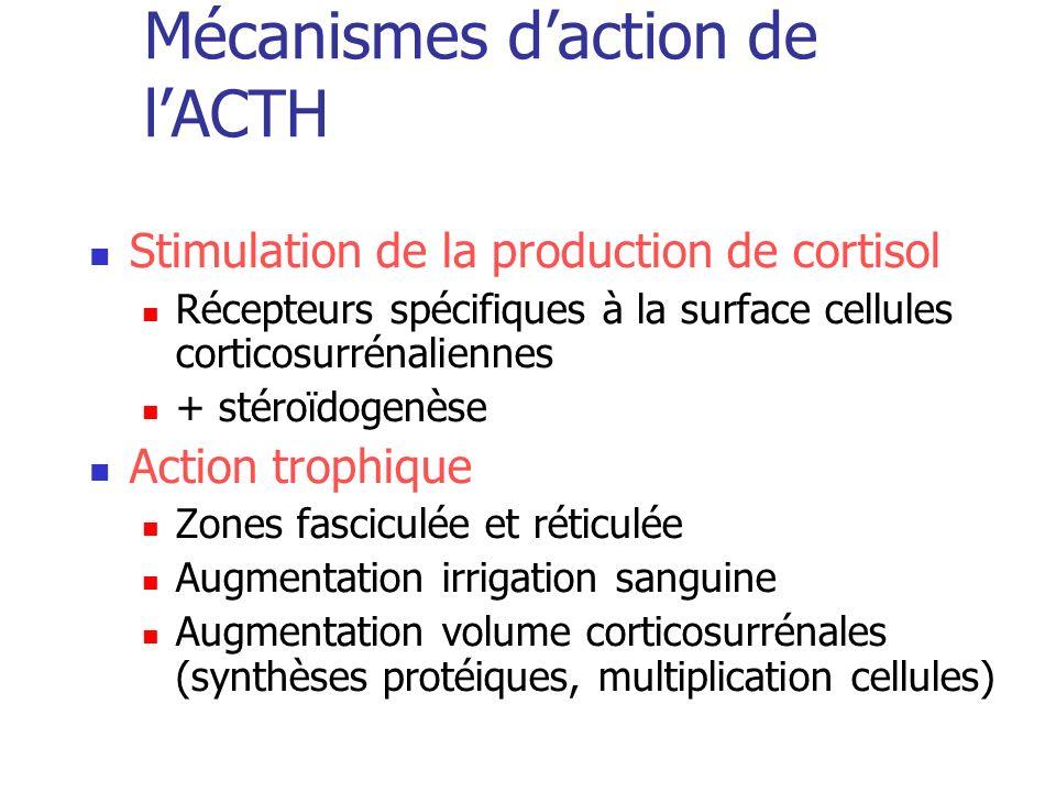 Mécanismes d'action de l'ACTH
