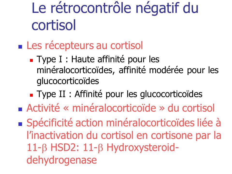 Le rétrocontrôle négatif du cortisol