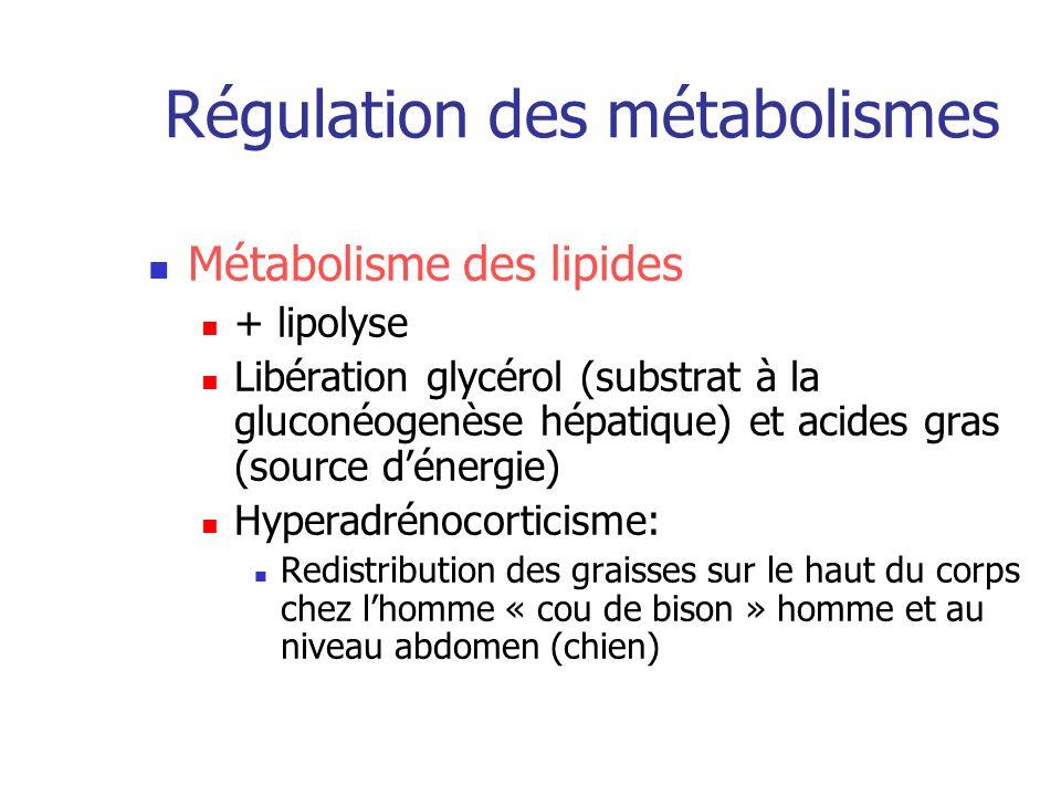 Régulation des métabolismes