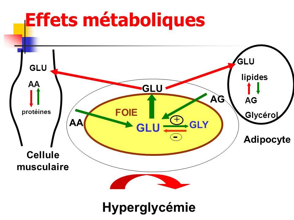 Effets métaboliques - Hyperglycémie GLU GLU AG FOIE + AA GLY Adipocyte