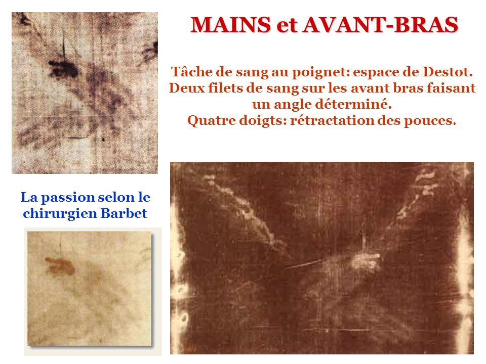 MAINS et AVANT-BRAS Tâche de sang au poignet: espace de Destot.
