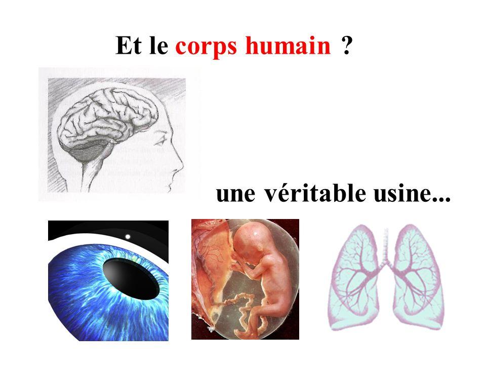 Et le corps humain une véritable usine...