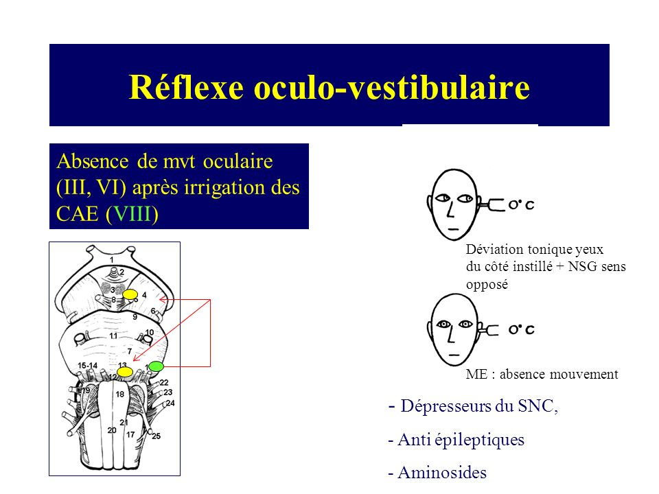 Réflexe oculo-vestibulaire