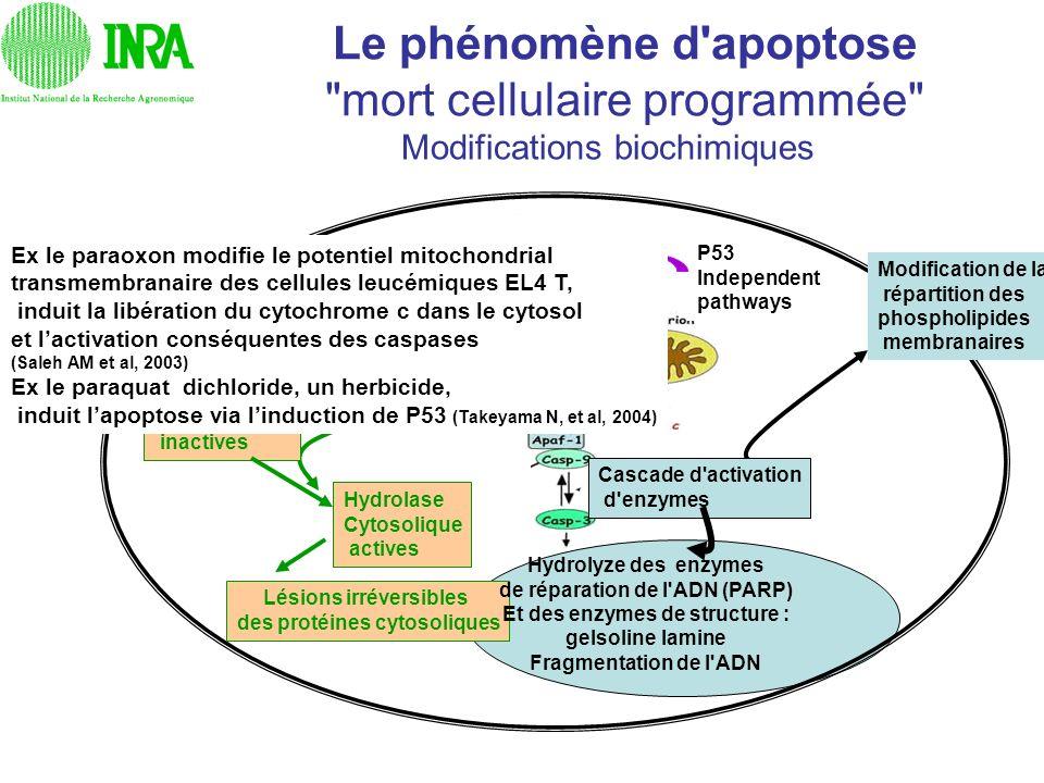Le phénomène d apoptose mort cellulaire programmée