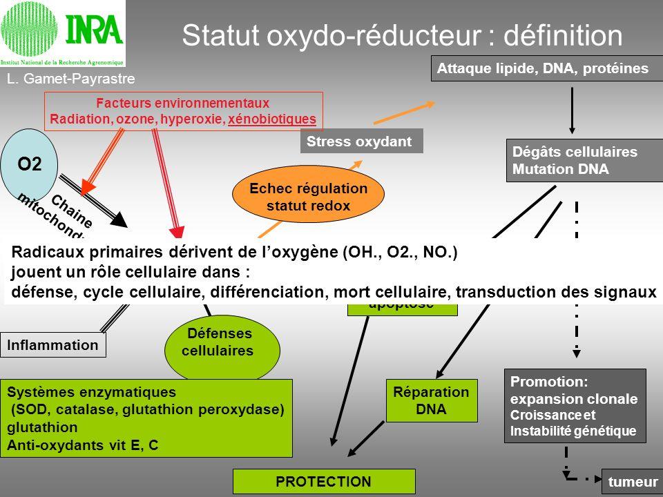 Statut oxydo-réducteur : définition