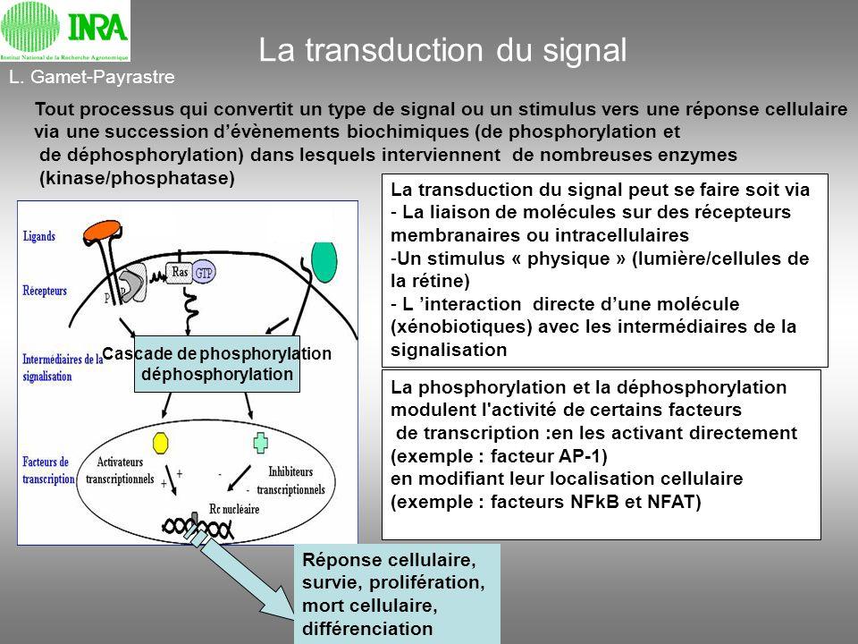 Cascade de phosphorylation