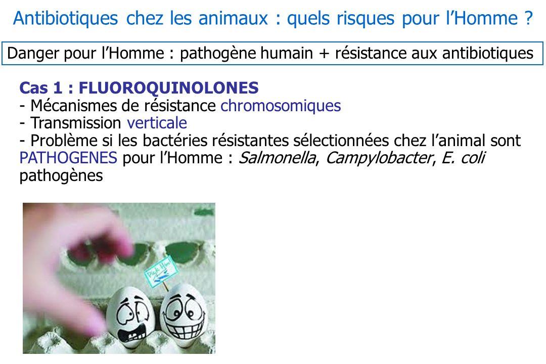 Antibiotiques chez les animaux : quels risques pour l'Homme