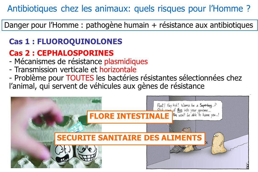 Antibiotiques chez les animaux: quels risques pour l'Homme