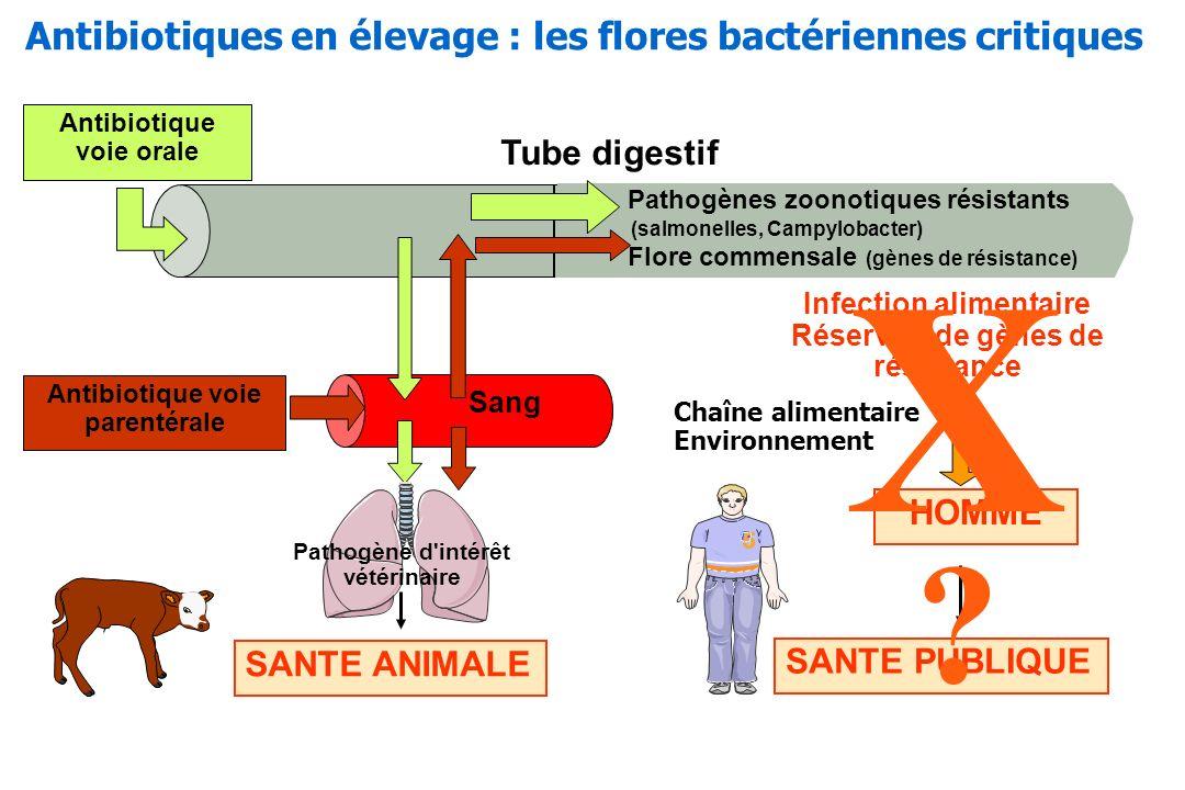 X Antibiotiques en élevage : les flores bactériennes critiques