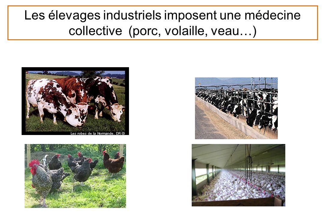 Les élevages industriels imposent une médecine collective (porc, volaille, veau…)