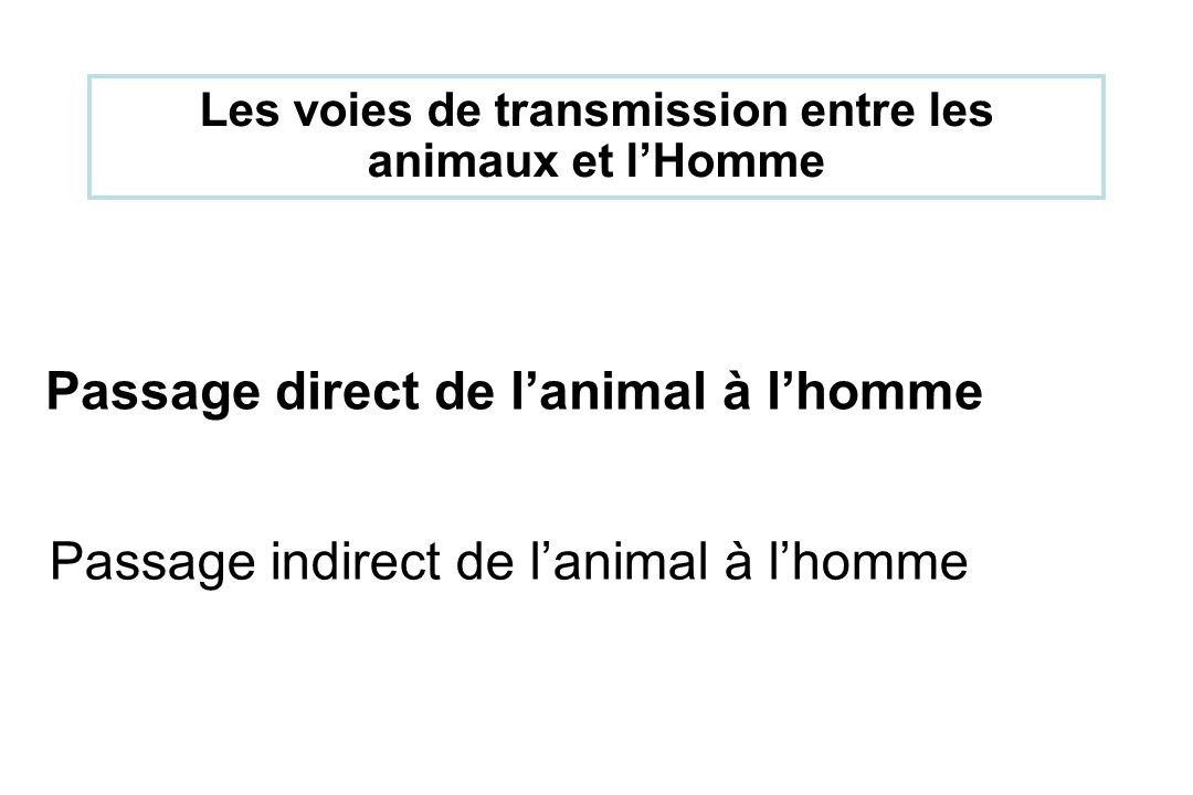 Passage direct de l'animal à l'homme