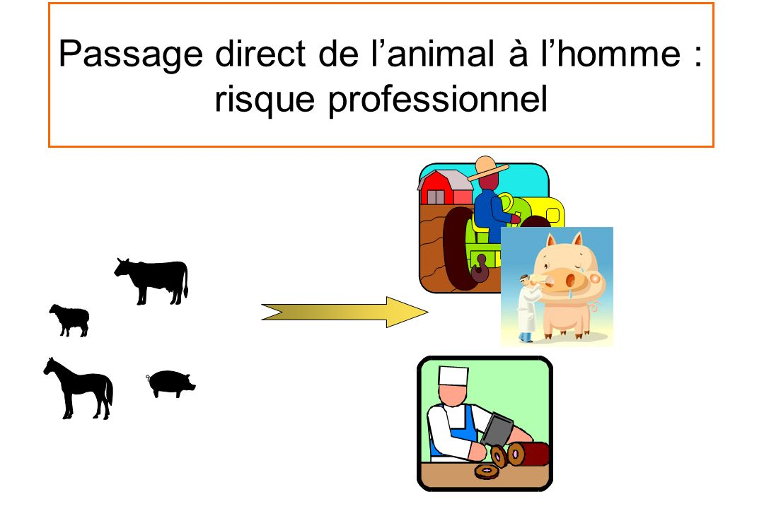 Passage direct de l'animal à l'homme : risque professionnel