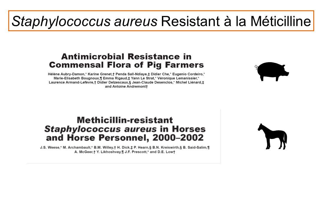 Staphylococcus aureus Resistant à la Méticilline