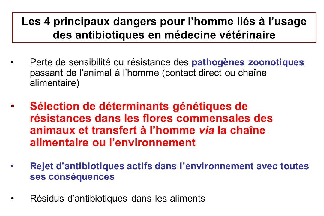 Les 4 principaux dangers pour l'homme liés à l'usage des antibiotiques en médecine vétérinaire