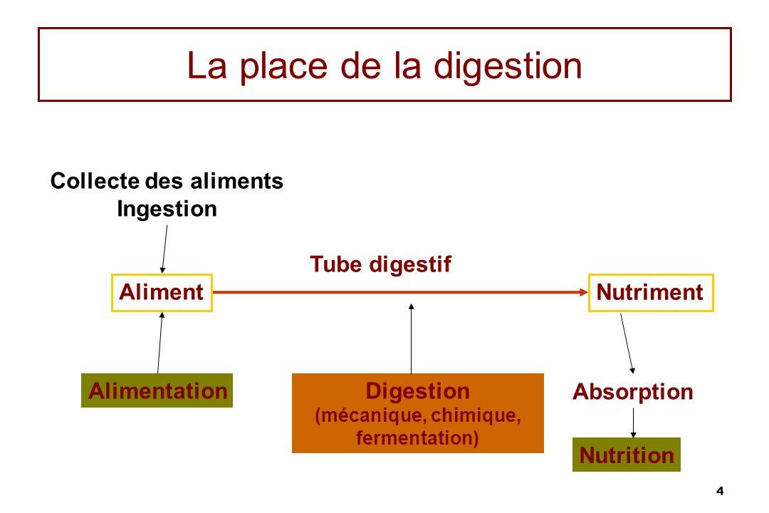 La place de la digestion