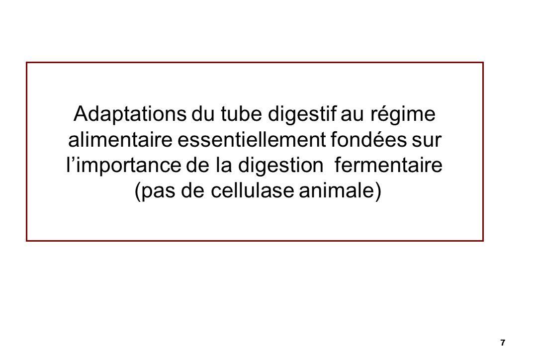 Adaptations du tube digestif au régime alimentaire essentiellement fondées sur l'importance de la digestion fermentaire (pas de cellulase animale)