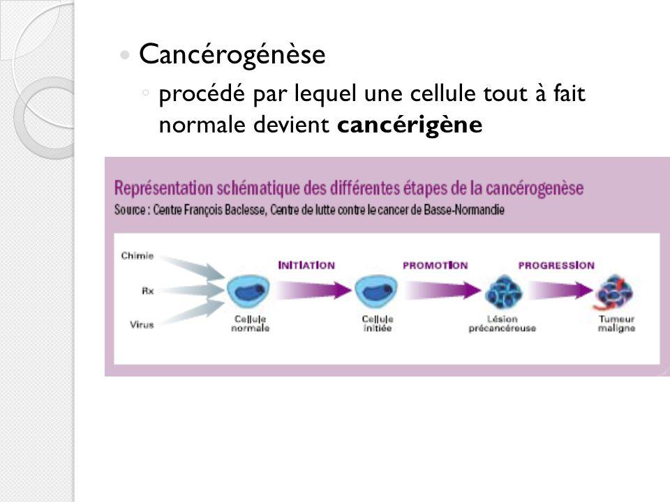 Cancérogénèse procédé par lequel une cellule tout à fait normale devient cancérigène