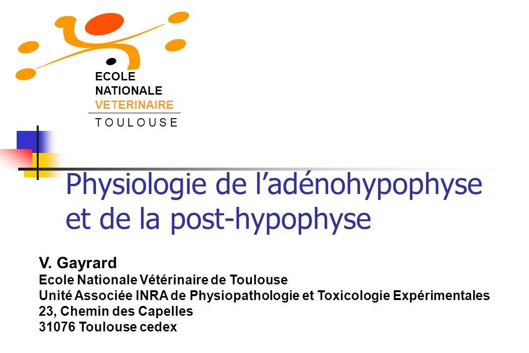 Physiologie de l'adénohypophyse et de la post-hypophyse