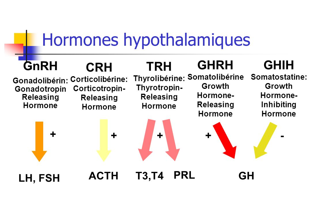 Hormones hypothalamiques