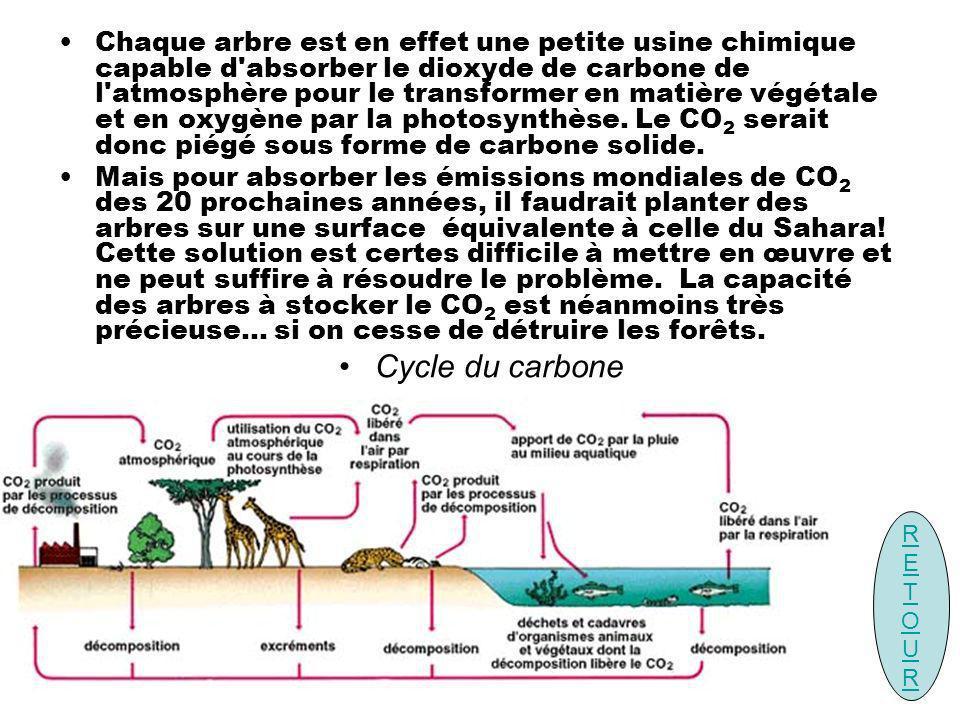 Chaque arbre est en effet une petite usine chimique capable d absorber le dioxyde de carbone de l atmosphère pour le transformer en matière végétale et en oxygène par la photosynthèse. Le CO2 serait donc piégé sous forme de carbone solide.