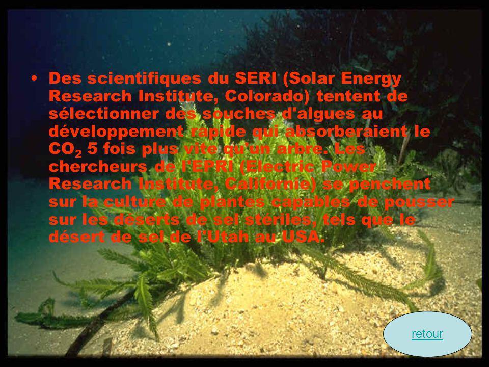 Des scientifiques du SERI (Solar Energy Research Institute, Colorado) tentent de sélectionner des souches d algues au développement rapide qui absorberaient le CO2 5 fois plus vite qu un arbre. Les chercheurs de l EPRI (Electric Power Research Institute, Californie) se penchent sur la culture de plantes capables de pousser sur les déserts de sel stériles, tels que le désert de sel de l Utah au USA.