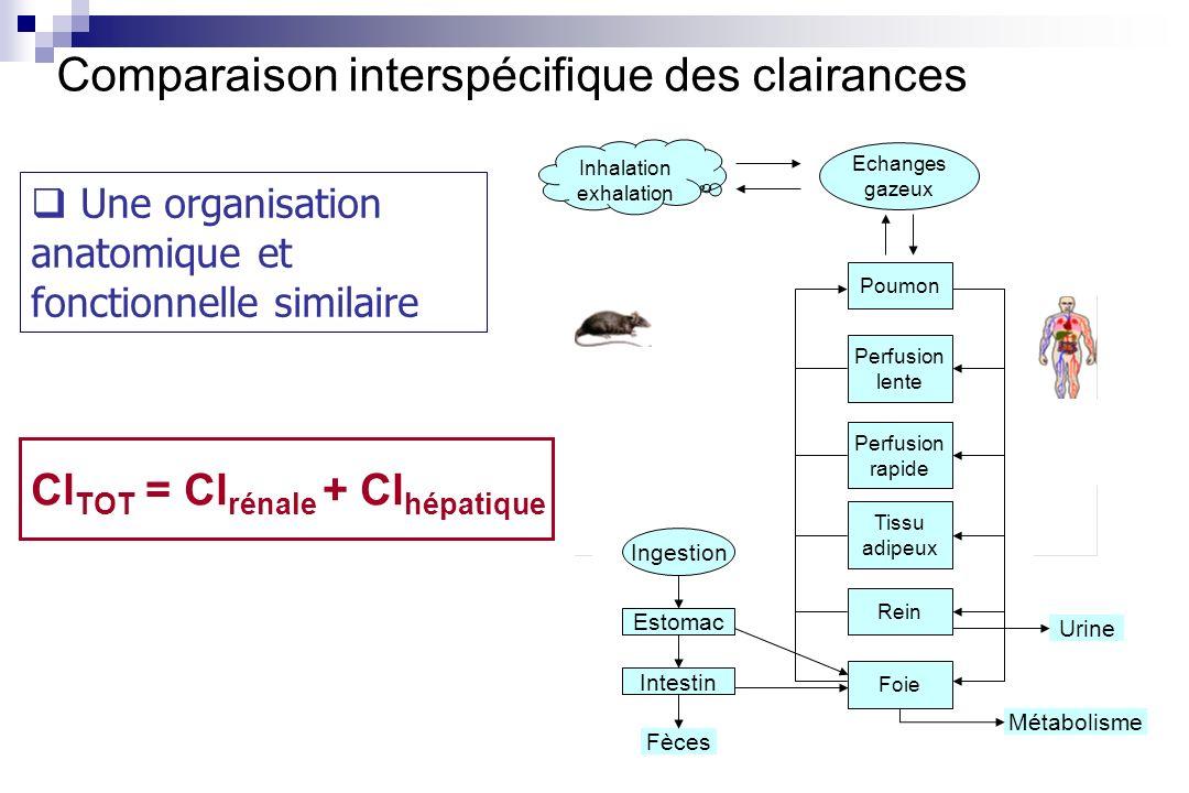 Comparaison interspécifique des clairances