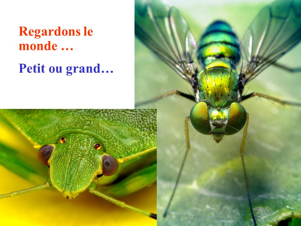 Regardons le monde … Petit ou grand…