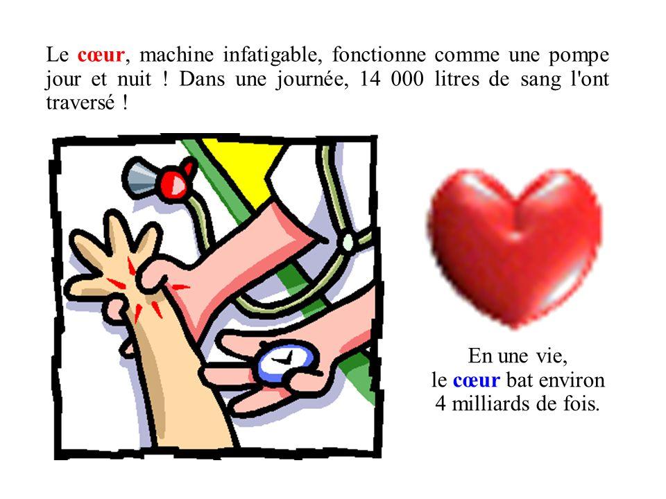 Le cœur, machine infatigable, fonctionne comme une pompe jour et nuit