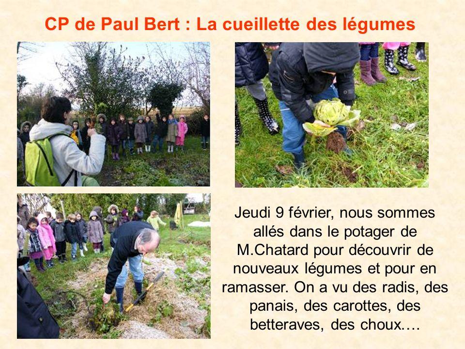 CP de Paul Bert : La cueillette des légumes