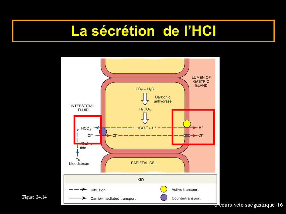 La sécrétion de l'HCl Figure 24.14