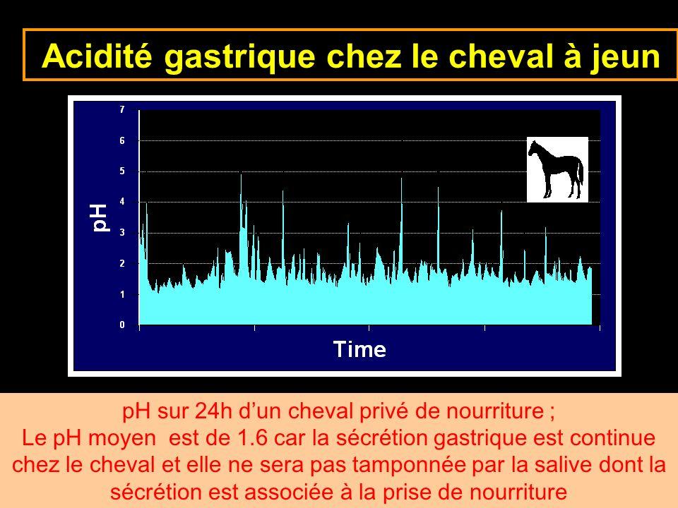 Acidité gastrique chez le cheval à jeun