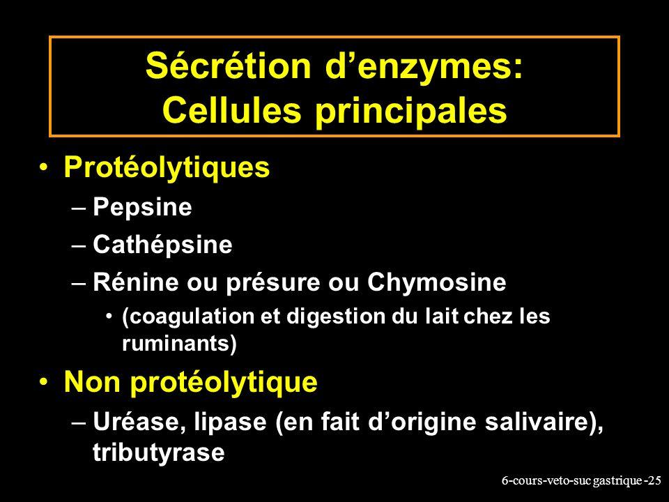 Sécrétion d'enzymes: Cellules principales