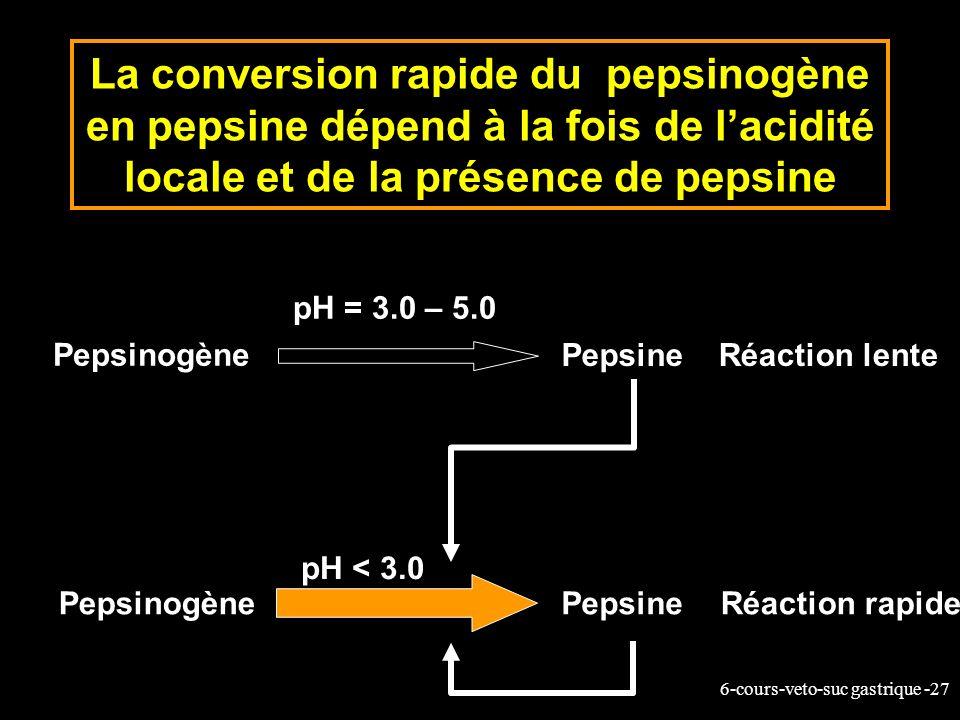 La conversion rapide du pepsinogène en pepsine dépend à la fois de l'acidité locale et de la présence de pepsine
