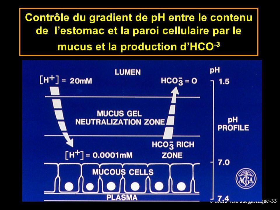 Contrôle du gradient de pH entre le contenu de l'estomac et la paroi cellulaire par le mucus et la production d'HCO-3