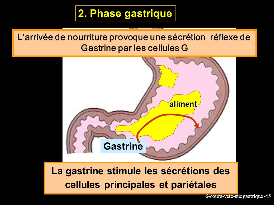 2. Phase gastrique Gastrine